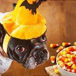 Halloween: Keep A Close Eye on the Treats, Pets