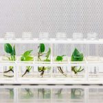 House plants don't clean your air that much – but this GM pothos might