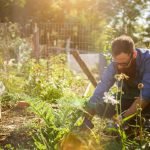 Eco-friendly backyard tips